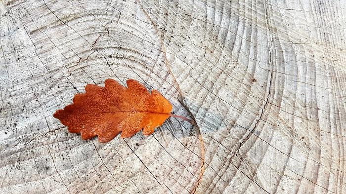 Farba na drevo, ktorá ho oživí a dodá lesk